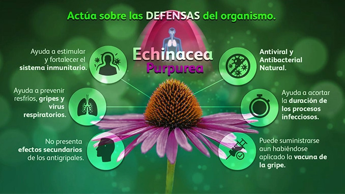 EchinaGrip refuerza las defensas naturales